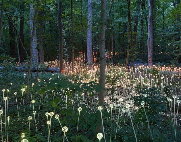 Vrtoviodsvjetla