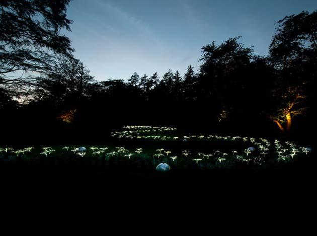 Vrtovi odsvjetla