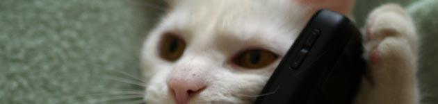 mačka-s-telefonom