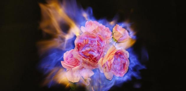 cvijece u plamenu