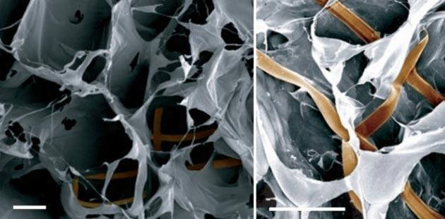 kiborg tkivo