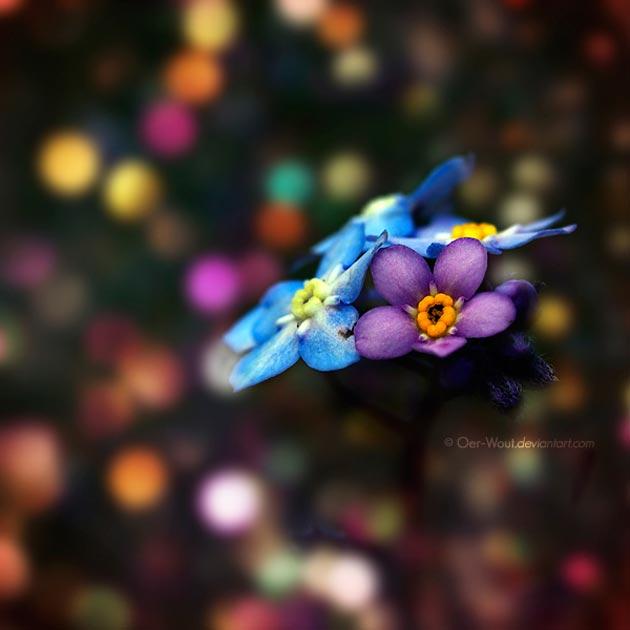 fotografije cvijeca