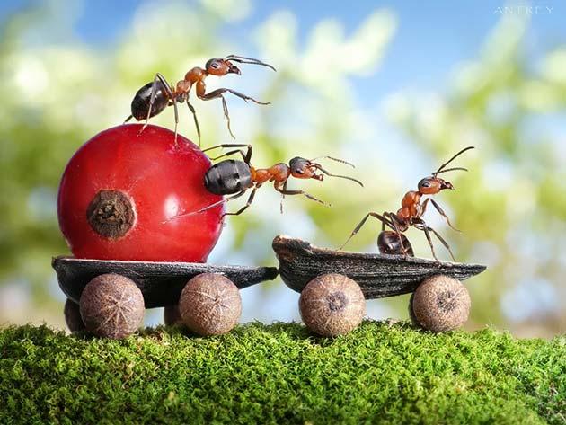 mravi