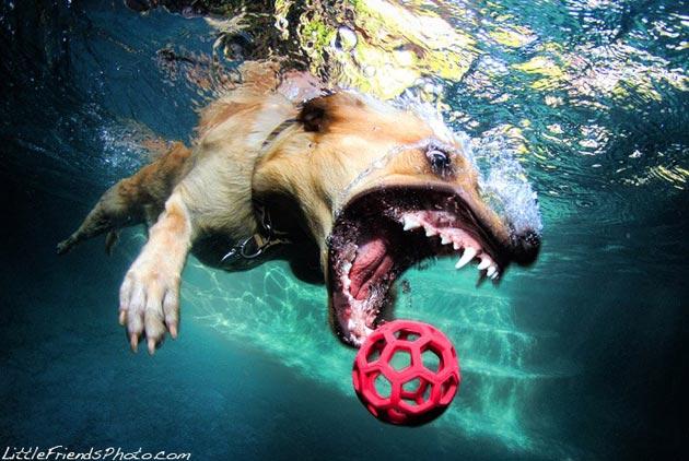 pas pod vodom