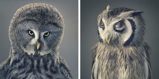 portreti zivotinja