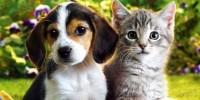 cuko i maca