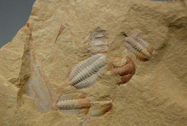 fosili2