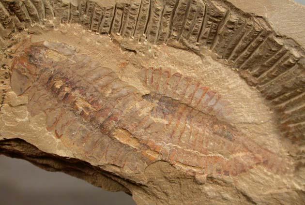 fosili3