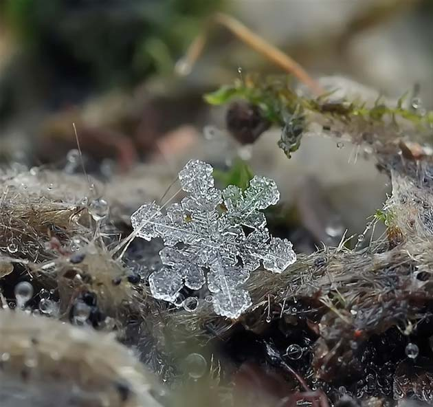 snježne pahuljice