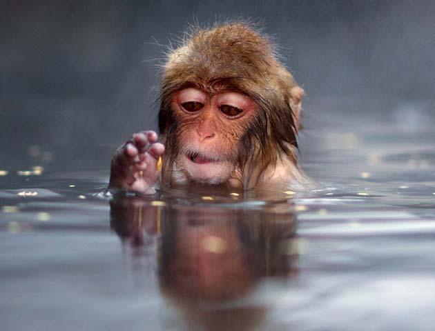 snjezni-majmuni2