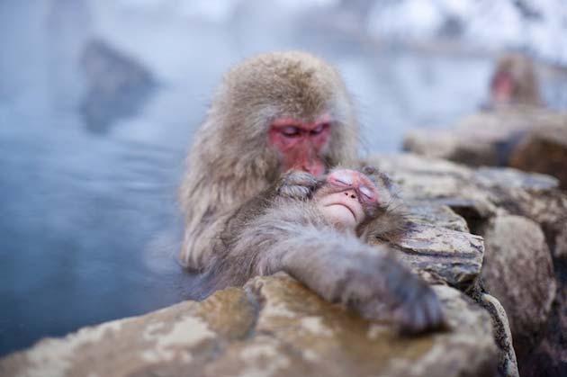 snjezni-majmuni5