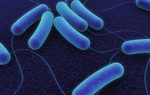 bakterije u tlu početi proizvoditi vrstu goriva koje može ići desno u našim automobilima bez modifikacije.