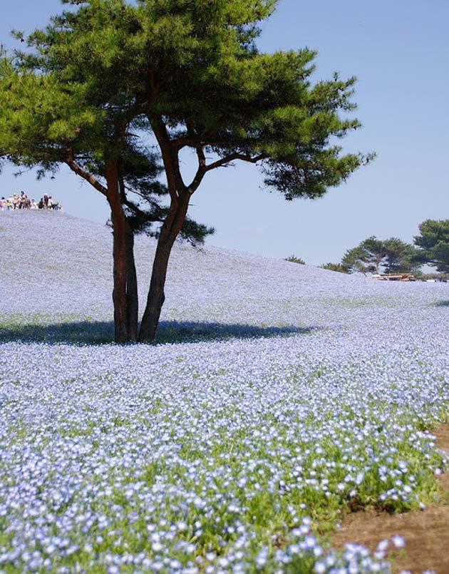 cvijetni-park10