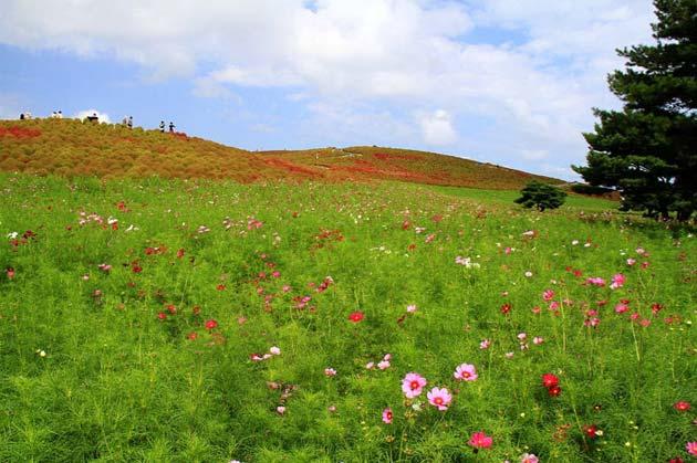 cvijetni-park2