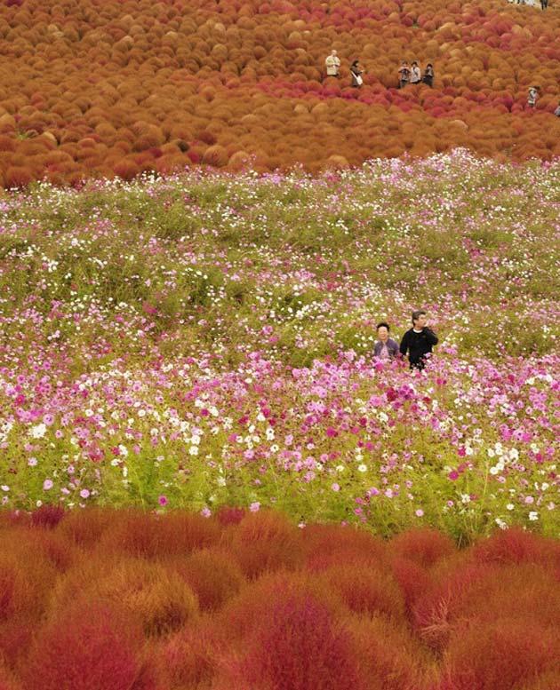 cvijetni-park7