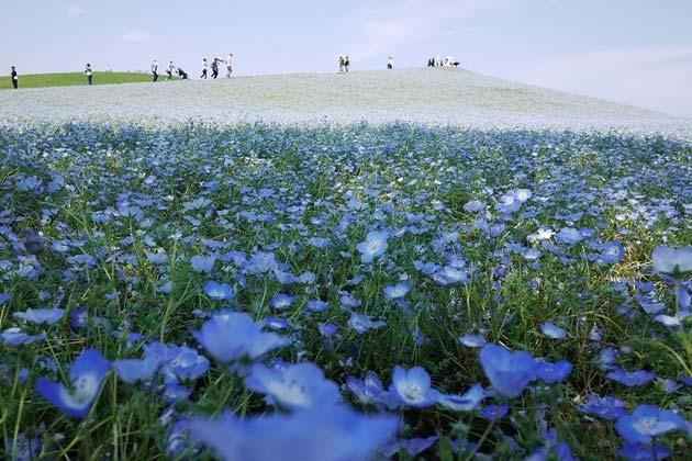cvijetni-park9