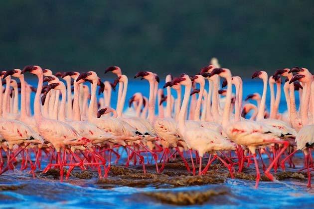 flaminga4