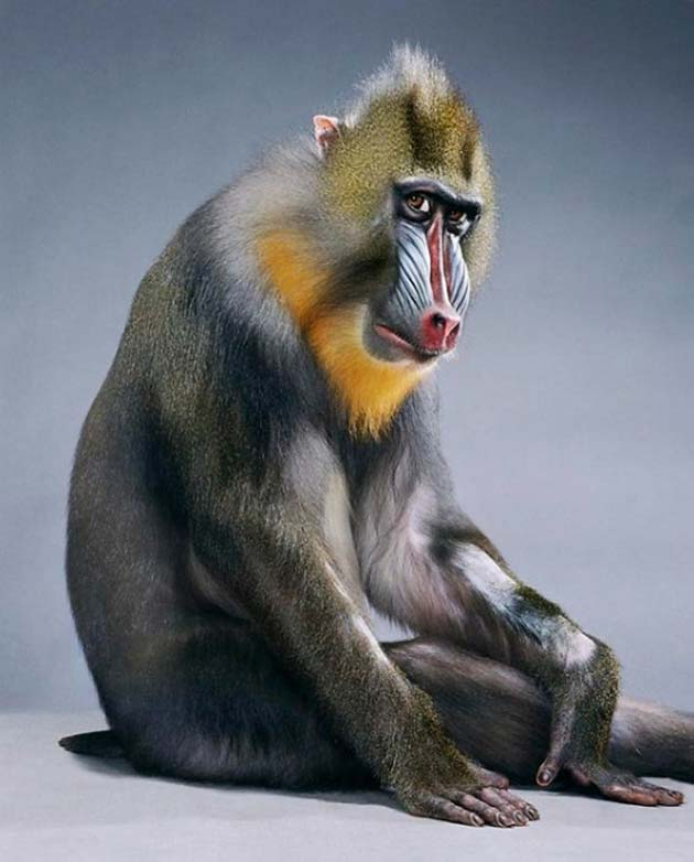 majmun10