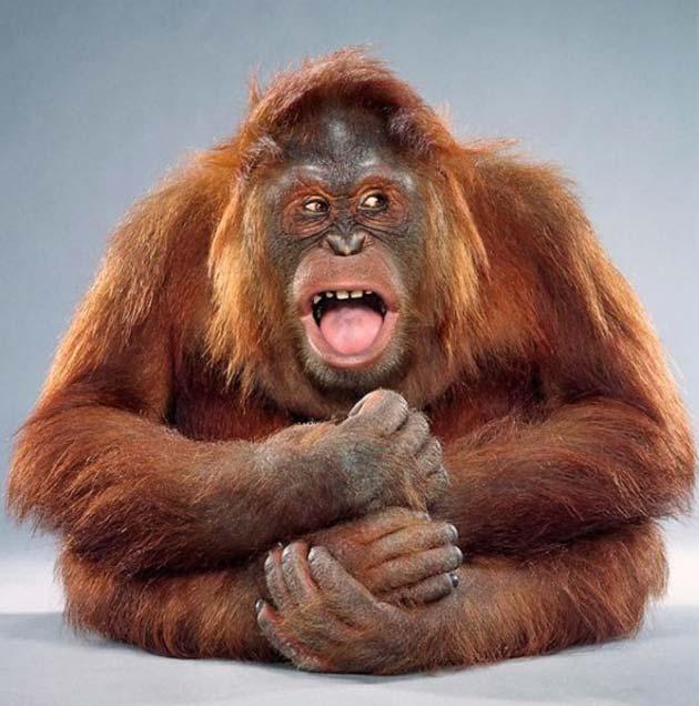 majmun12