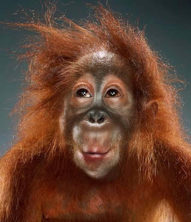 majmun13