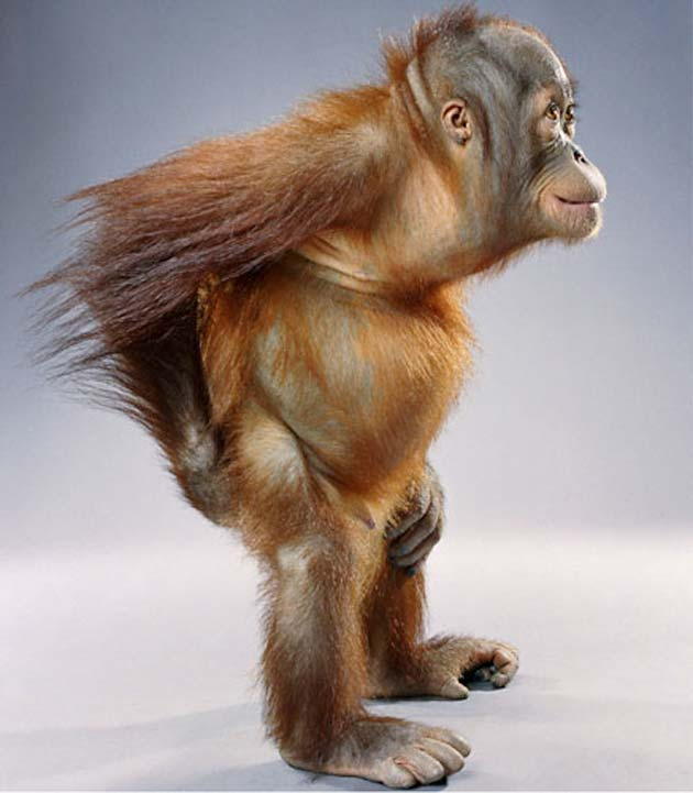 majmun4