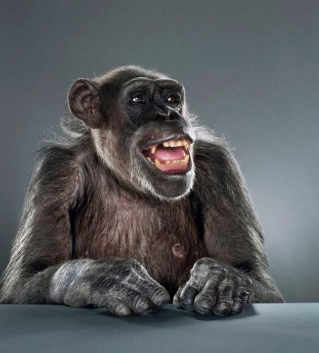 majmun5
