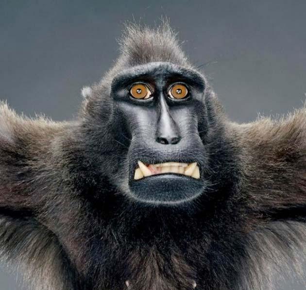 majmun7