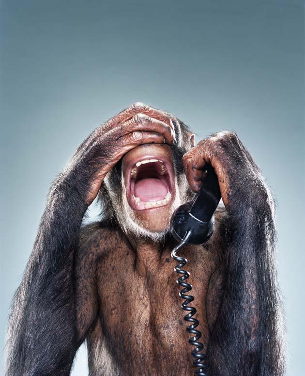 majmun8