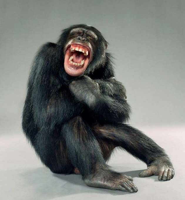 majmun9