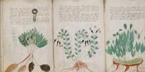 Voynichev-rukopis