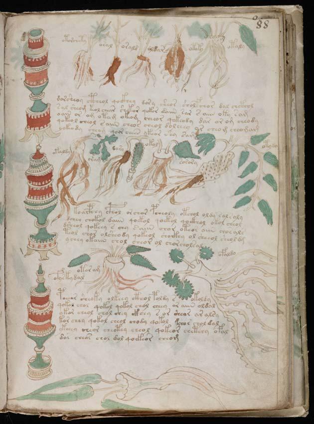Voynichev-rukopis9