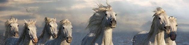 konji1