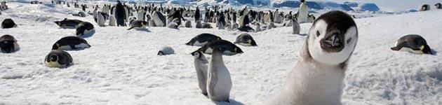 pingvini3