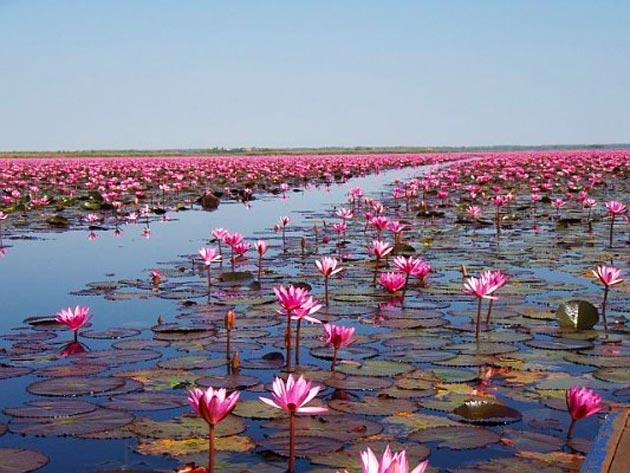 Jezero-Lotosa2