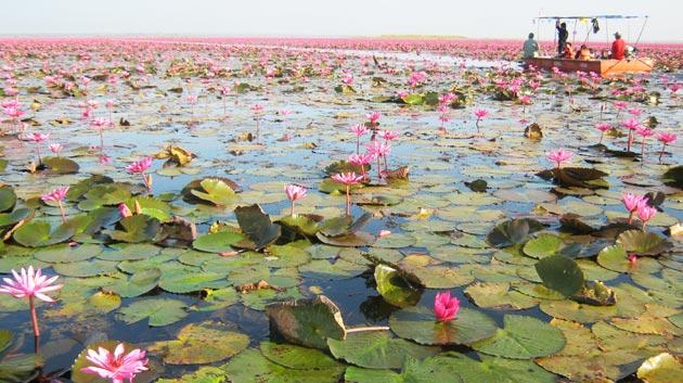 Jezero-Lotosa6