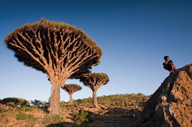 Sokotra1