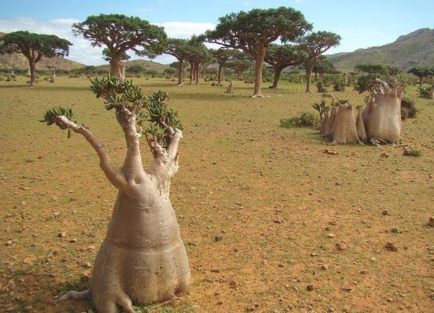 Sokotra6