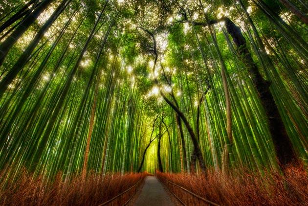 suma-bambusa1
