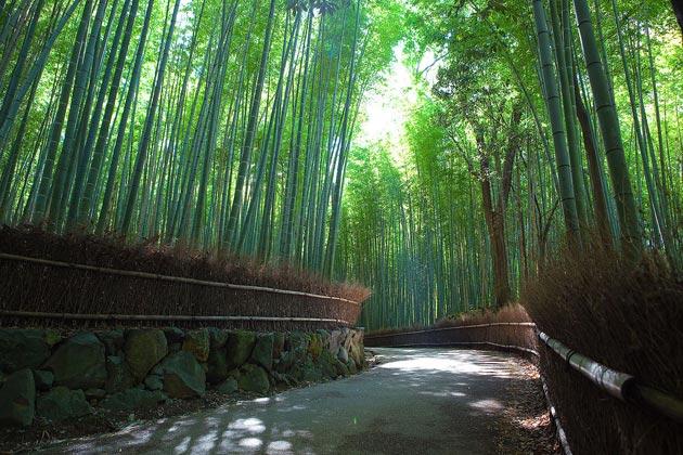 suma-bambusa2