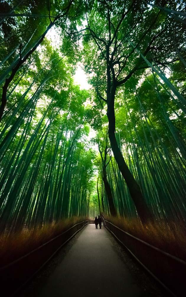 suma-bambusa5