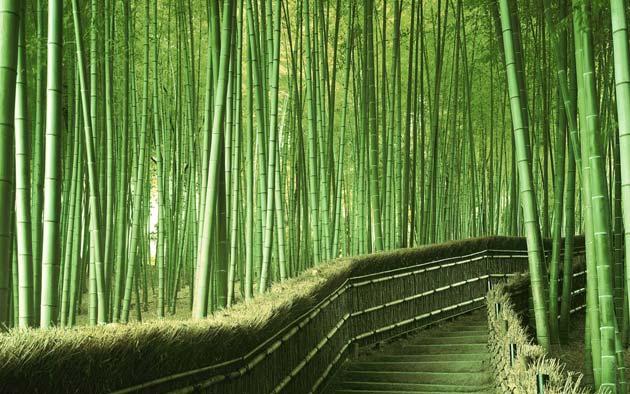 suma-bambusa6
