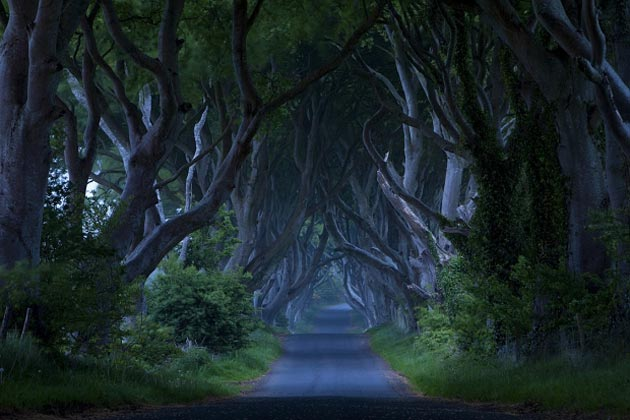 Dark-Hedges-Irska-2
