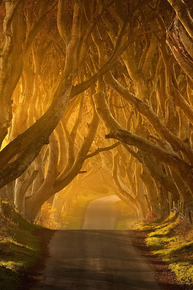 Dark-Hedges-Irska-3