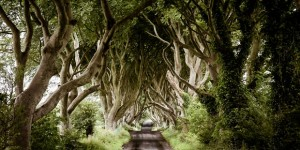 Dark-Hedges-Irska