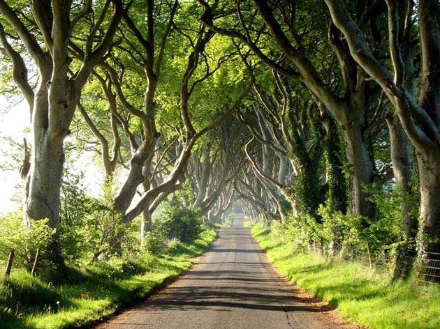Dark-Hedges-Irska-4