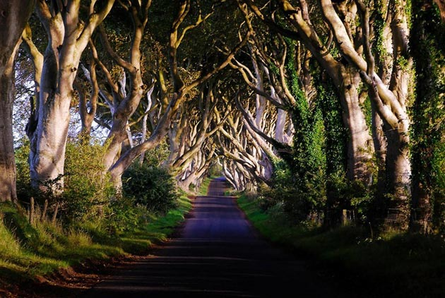 Dark-Hedges-Irska-5