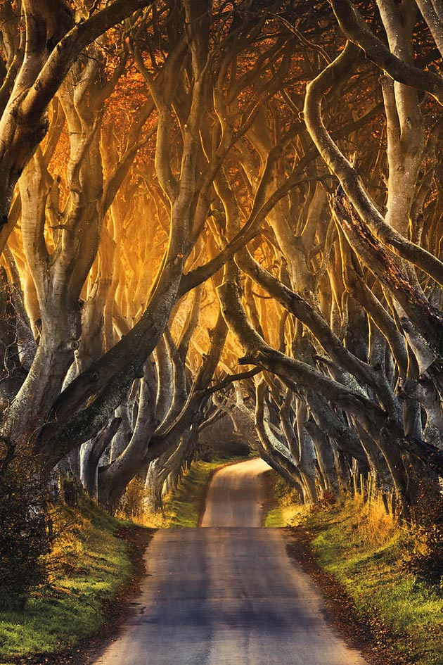 Dark-Hedges-Irska-6