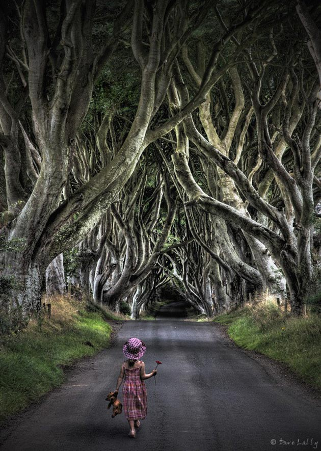 Dark-Hedges-Irska-7