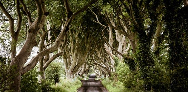 Dark-Hedges-Irska