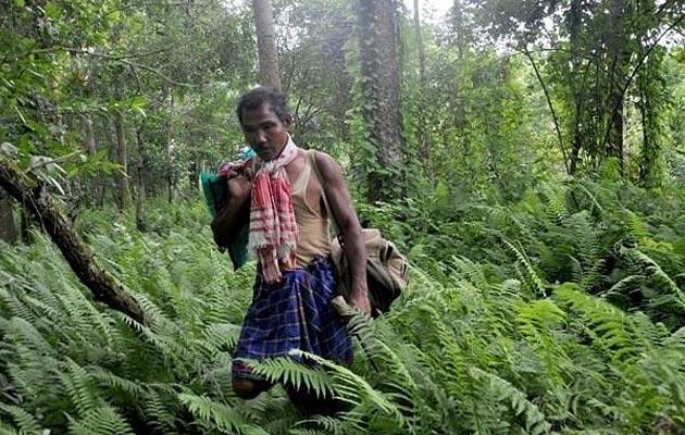 Jadav-Payeng1